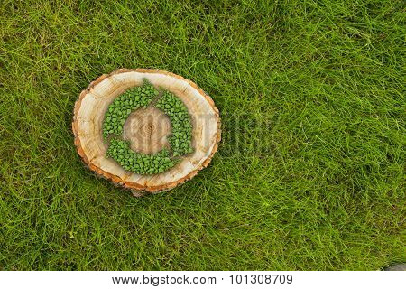 tree stump on the green grass with recycle symbol, top view