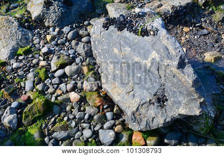 Drying Mussles On Rock