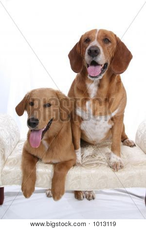 Dogs On Furniture