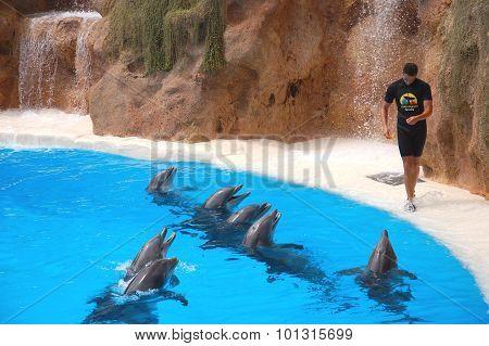 Dolphin show in Loro Park in Puerto de la Cruz on Tenerife