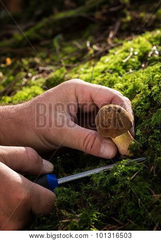 Harvesting Fungi