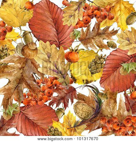 Autumn watercolor background colorful leaves. w