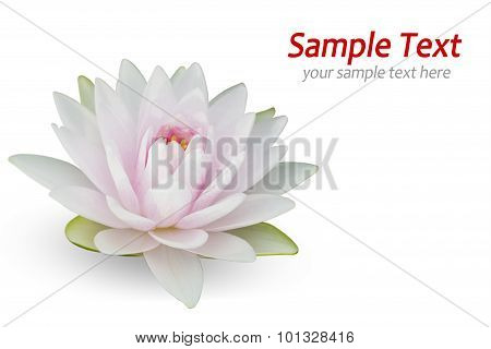 Waterlily on white