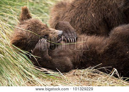 Cute baby bear posing