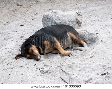 Homeless Thai Dog Sleeping On Ash In The Winter