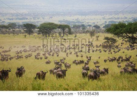In Wildlife Sanctuary