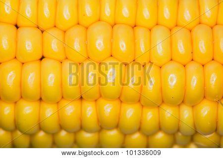 Corn Macro Large Grains