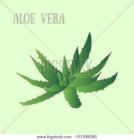 Vector aloe vera in pot
