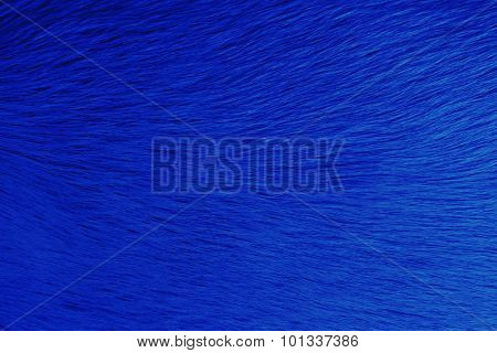 Animal Hair Dye In Blue