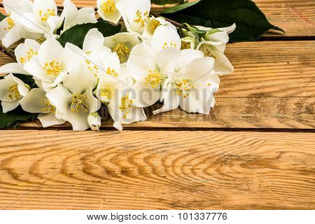 Beautiful jasmine flowers on wood background. Arrangement of flowers located on aged wooden planks v