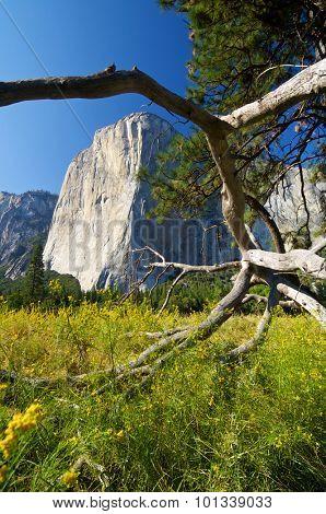 Capitan view in Yosemite Valley, California, United States.