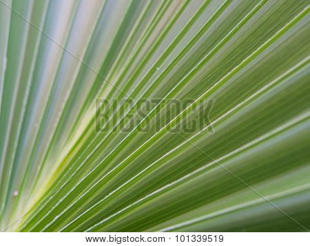 decorative plant leaf with striations