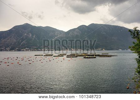 Farm Of Cultivated Seashells On Mediterranean Coastline