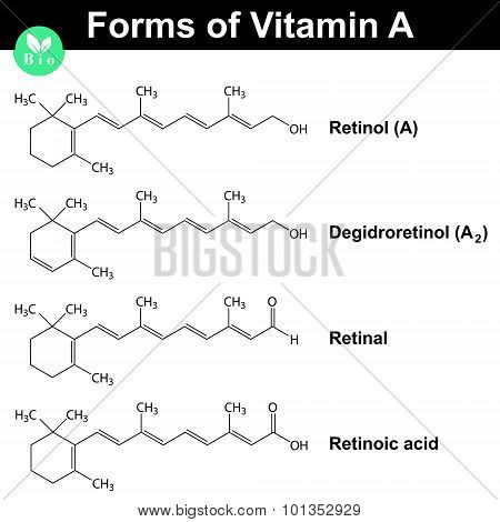Forms Of Vitamin A
