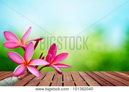 Plumeria Flower On Spring Background