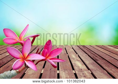 Plumeria Flower On Spring Background