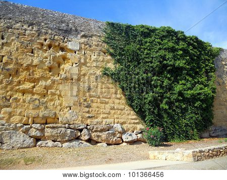Roman wall with plant