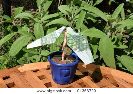 Money Tree - An Optimistic Investment