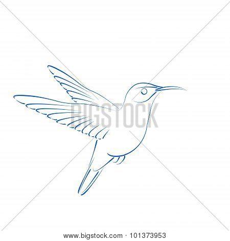 Sketched hummingbird colibri.