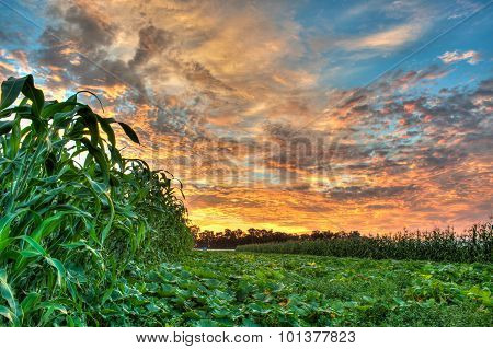 Vibrant sky over the pumpkin patch