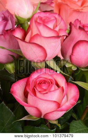 macro pink rose in bouquet