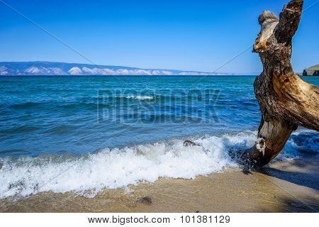 Snag On The Baikal Coastline