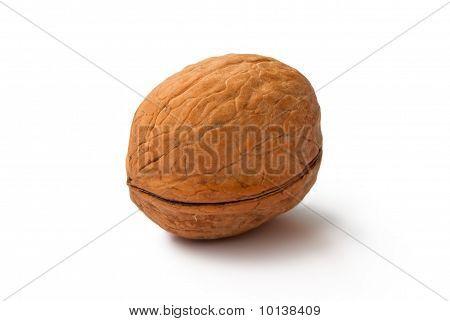 A Circassian Walnut
