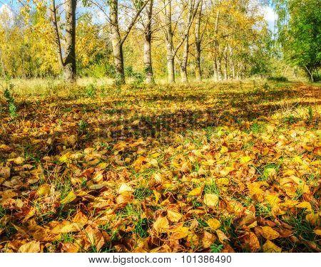 Park In Autumn With Fallen Leaves - Autumn Landscape