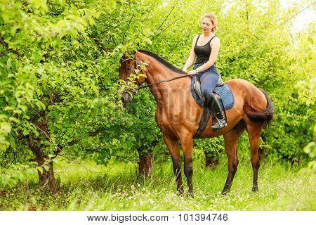 Woman Jockey Training Riding Horse. Sport Activity
