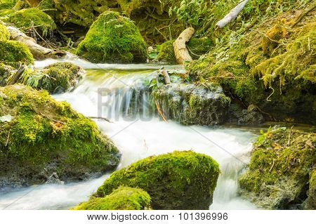 Small Forest Stream Waterfalls