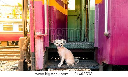Dog On Train, Vintage Style
