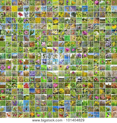 A collage of pictures of medicinal plants