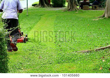 Green Grass Is Mowed Lawn Mower