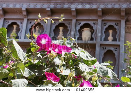 Purple Flower In Front Of Old Vases