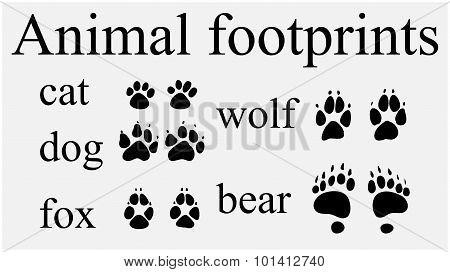 Set of animal trails footprints