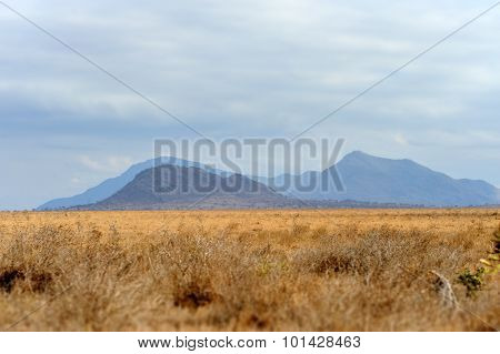 Landscape In Tsavo National Park, Kenya