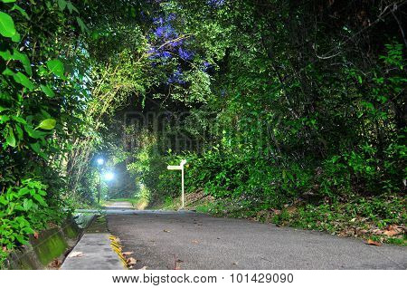 Walkway surrounded by lush greenery