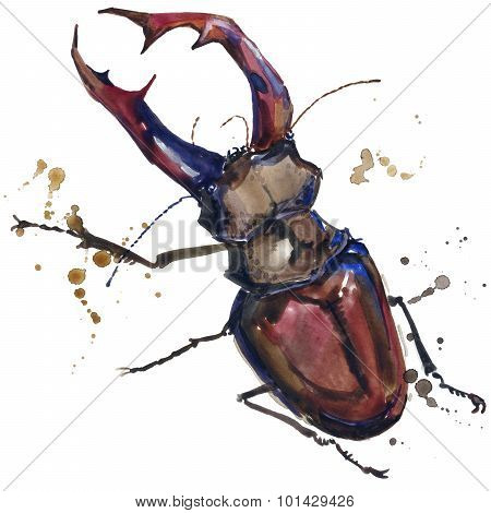 stag beetle insect T-shirt graphics. stag beetle  illustration with splash watercolor textured backg