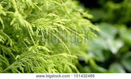 Textured green leaves background