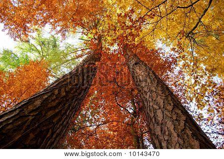 Autumnal tree stems