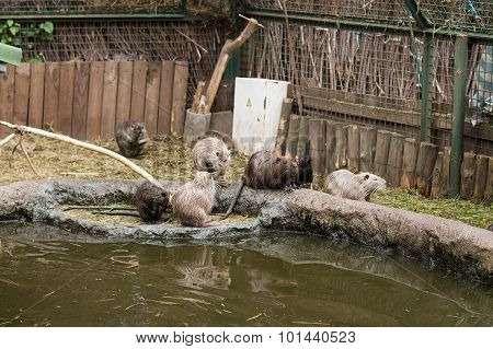 Flock of otters