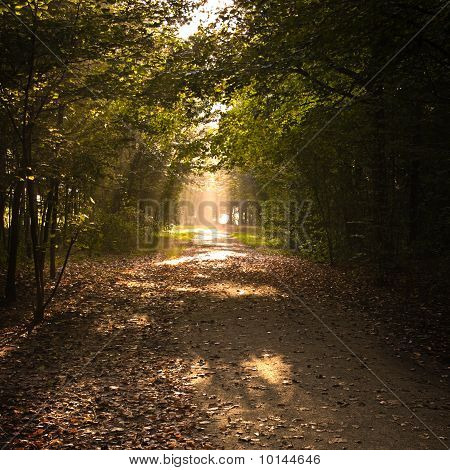 Path In Fall With Lightrays And Fallen Leaves