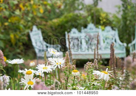 Wildflowers In Front Of Antique Chairs