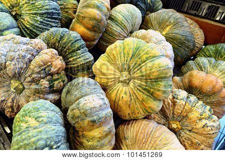 Pumkin In Market