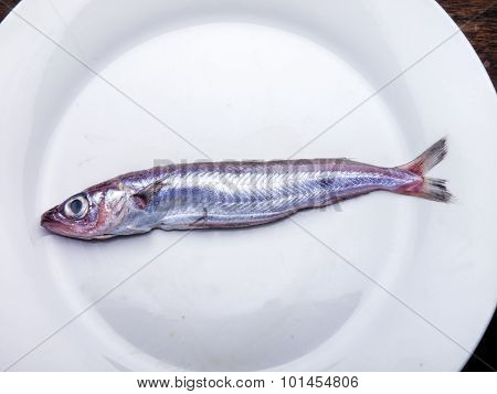 Raw Blue Whiting