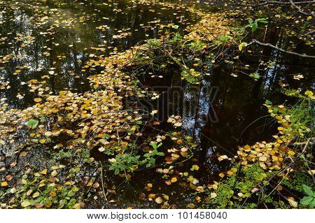 Forest River Forest In Autumn With Reflection In Water Strewn With Fallen Leaves