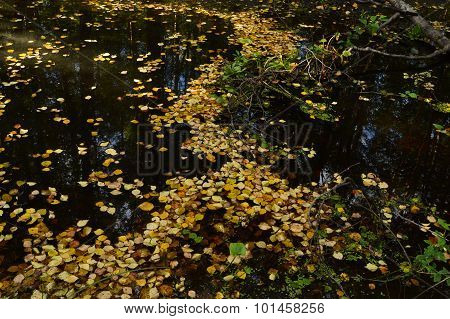 The Path On The Water From The Fallen Leaves On A Forest River