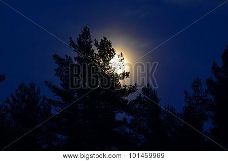 Full Moon Over The Forest, South Bohemia
