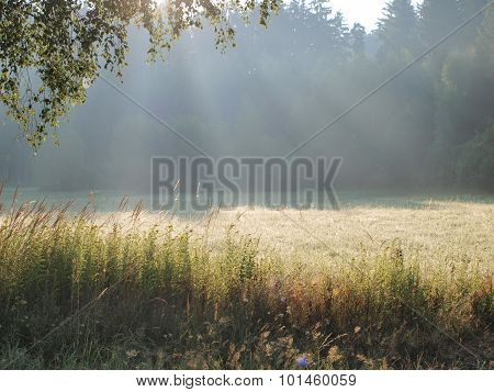 View On A Sunny Summer Meadow