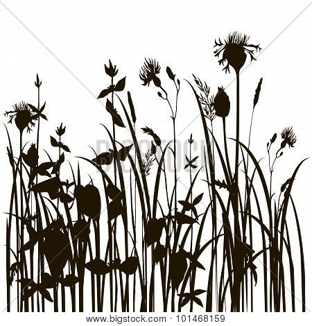 silhouettes of herbs and flowers